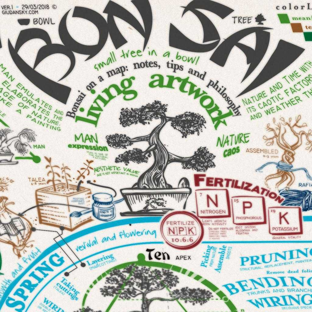 Bonsai in un poster